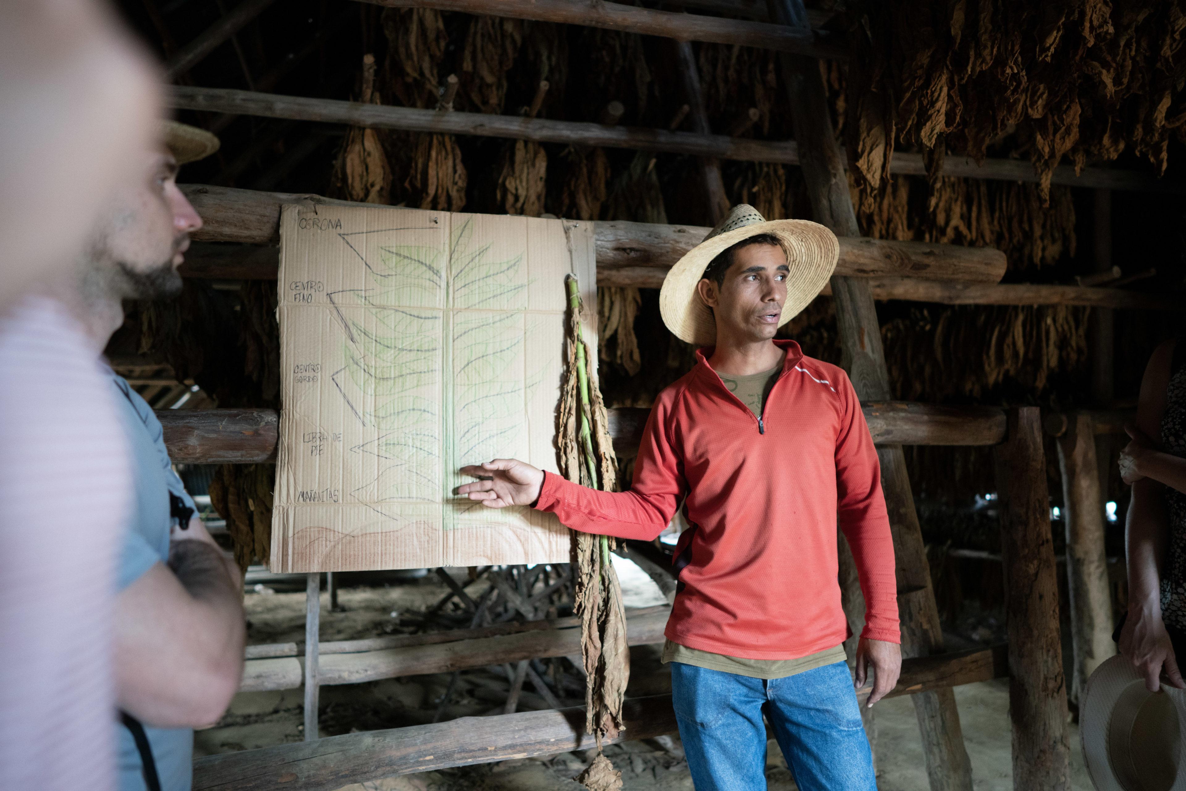 Ein kubanischer Tabakbauer erklärt die Produktionsprozess von Tabakblätter.