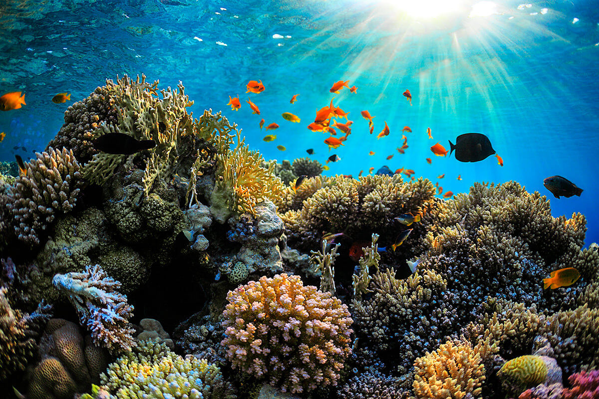 Korallenriff in Kuba