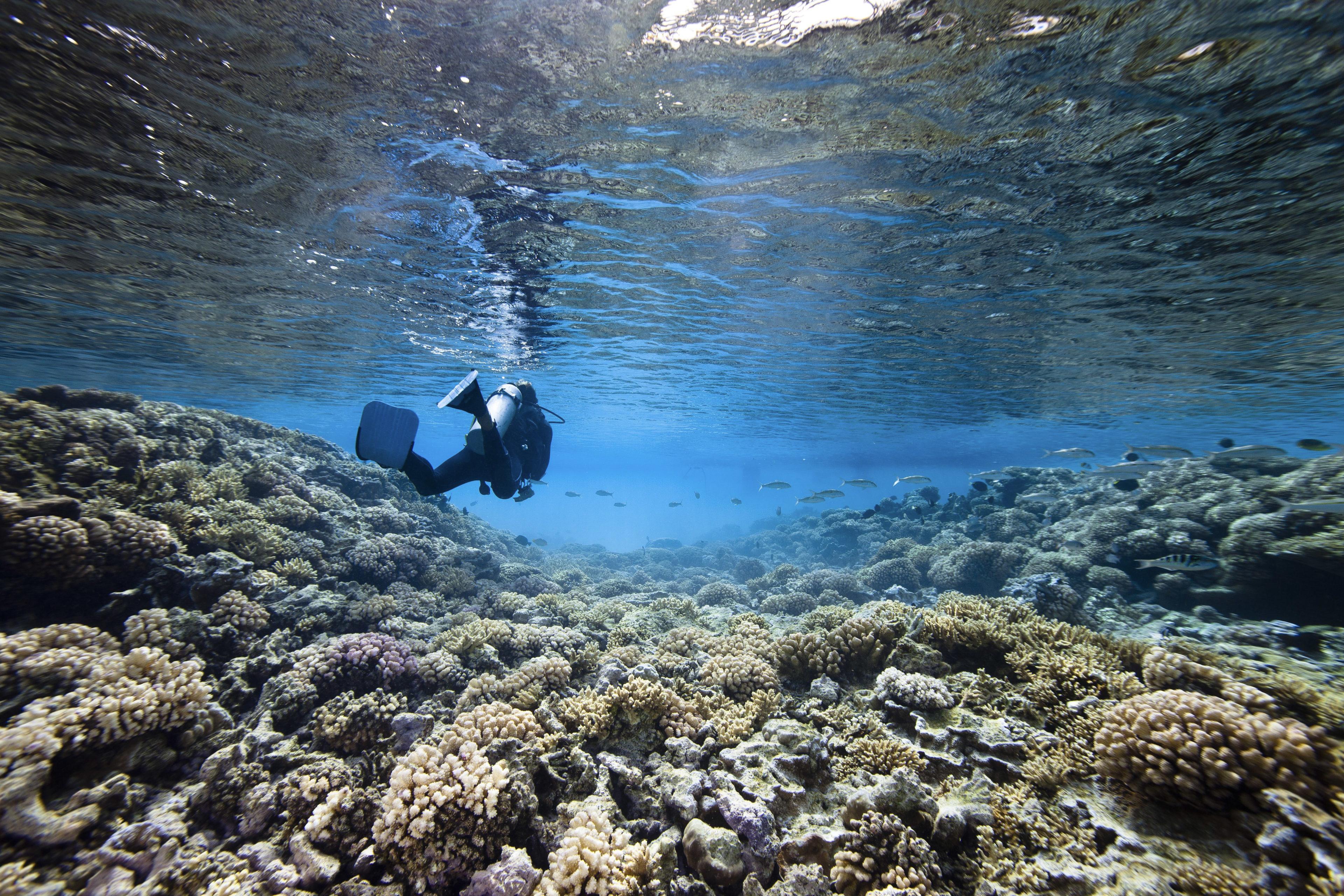 Taucher im korallenrief