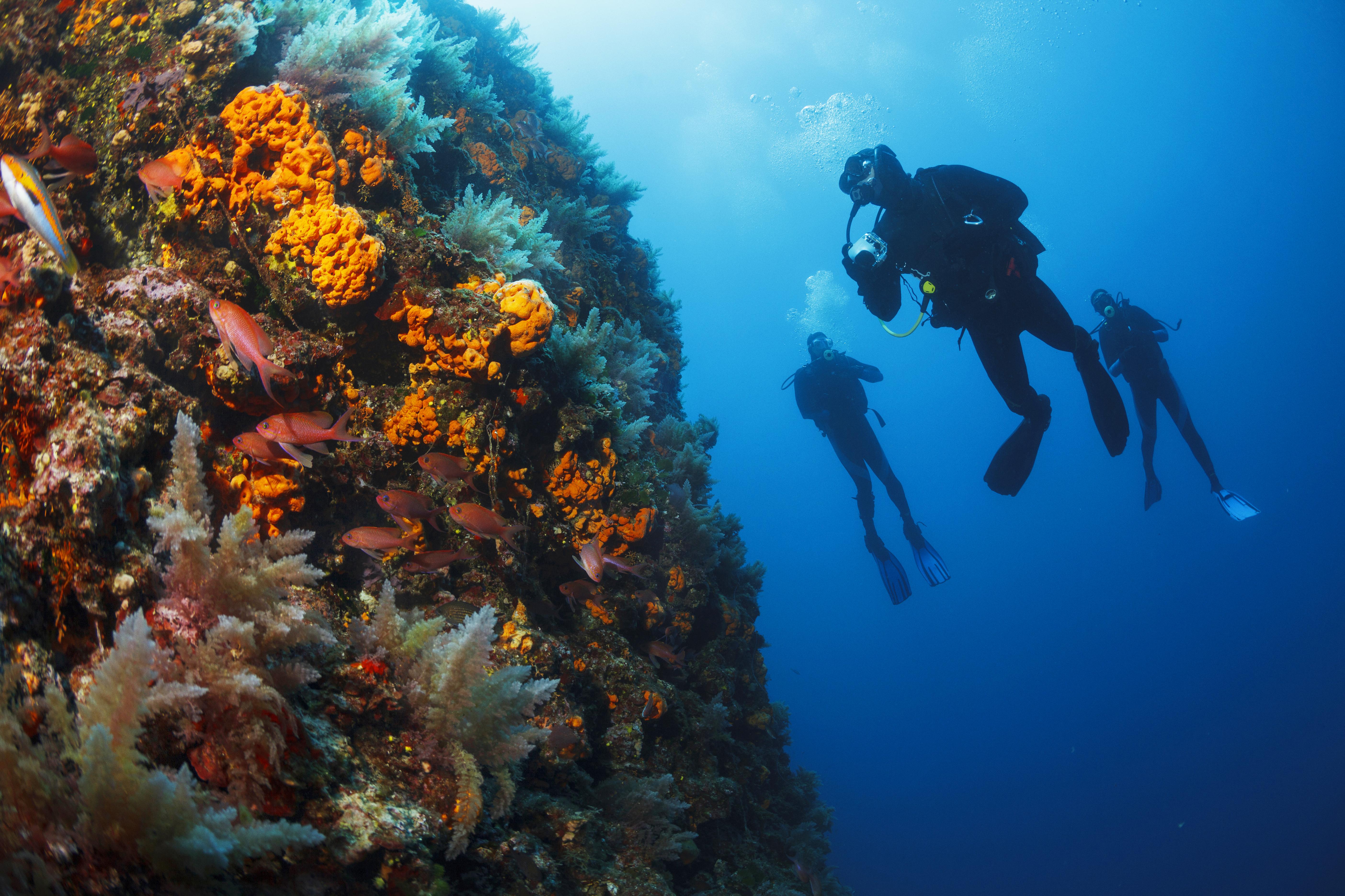 Unterwasserszene mit einer Gruppe von Tauchern, die einen Schwamm im Meer erforschen und genießen.
