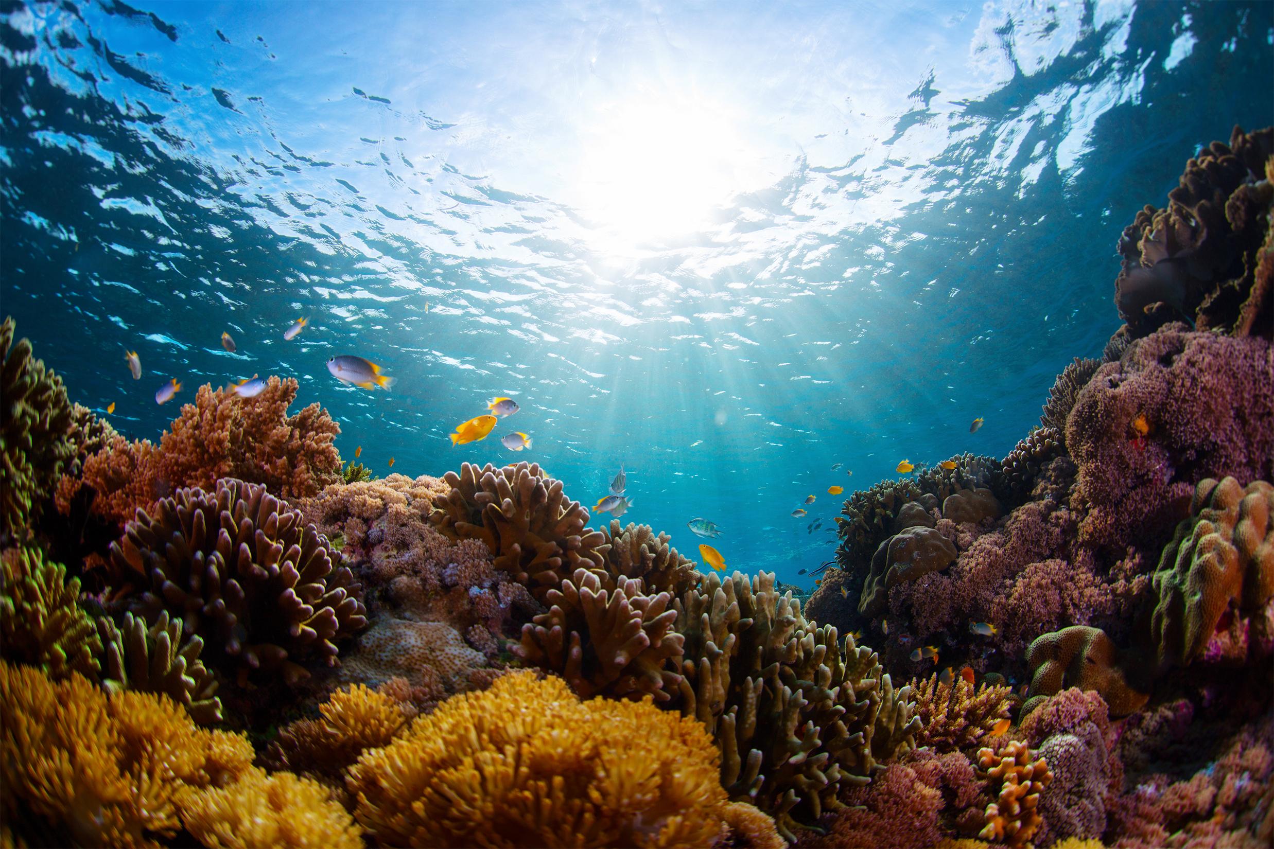 Unterwasseraufnahme eines lebhaften Korallenriffs mit Fischen in Jardines del Rey