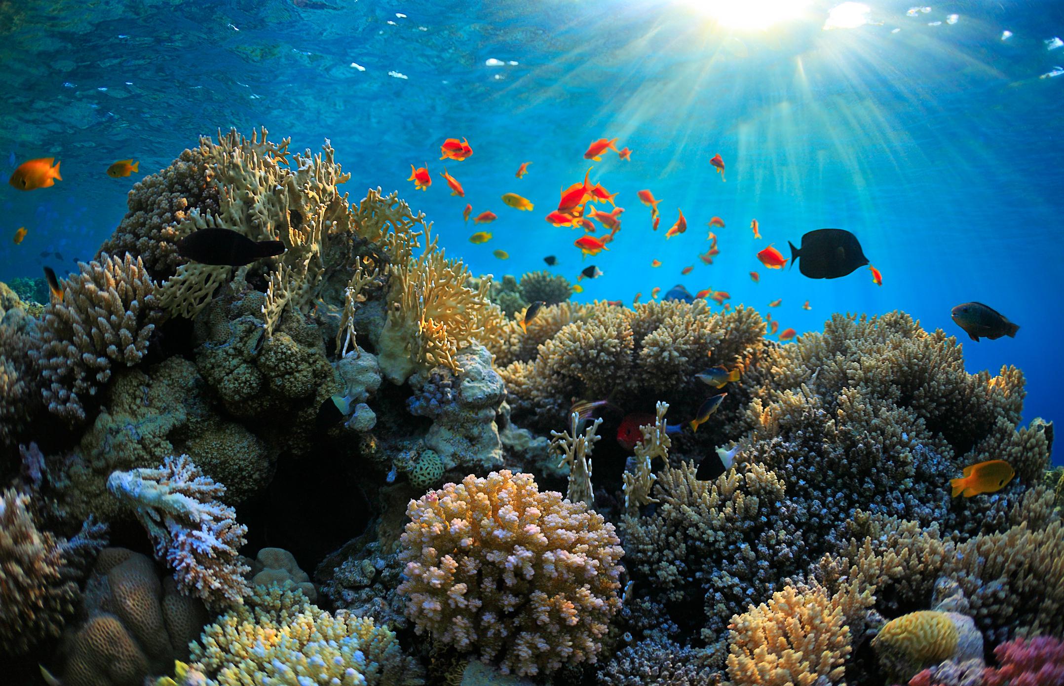 Ein lebhaftes, flaches Korallenriff in Santa Lucia mit Fischen rundherum
