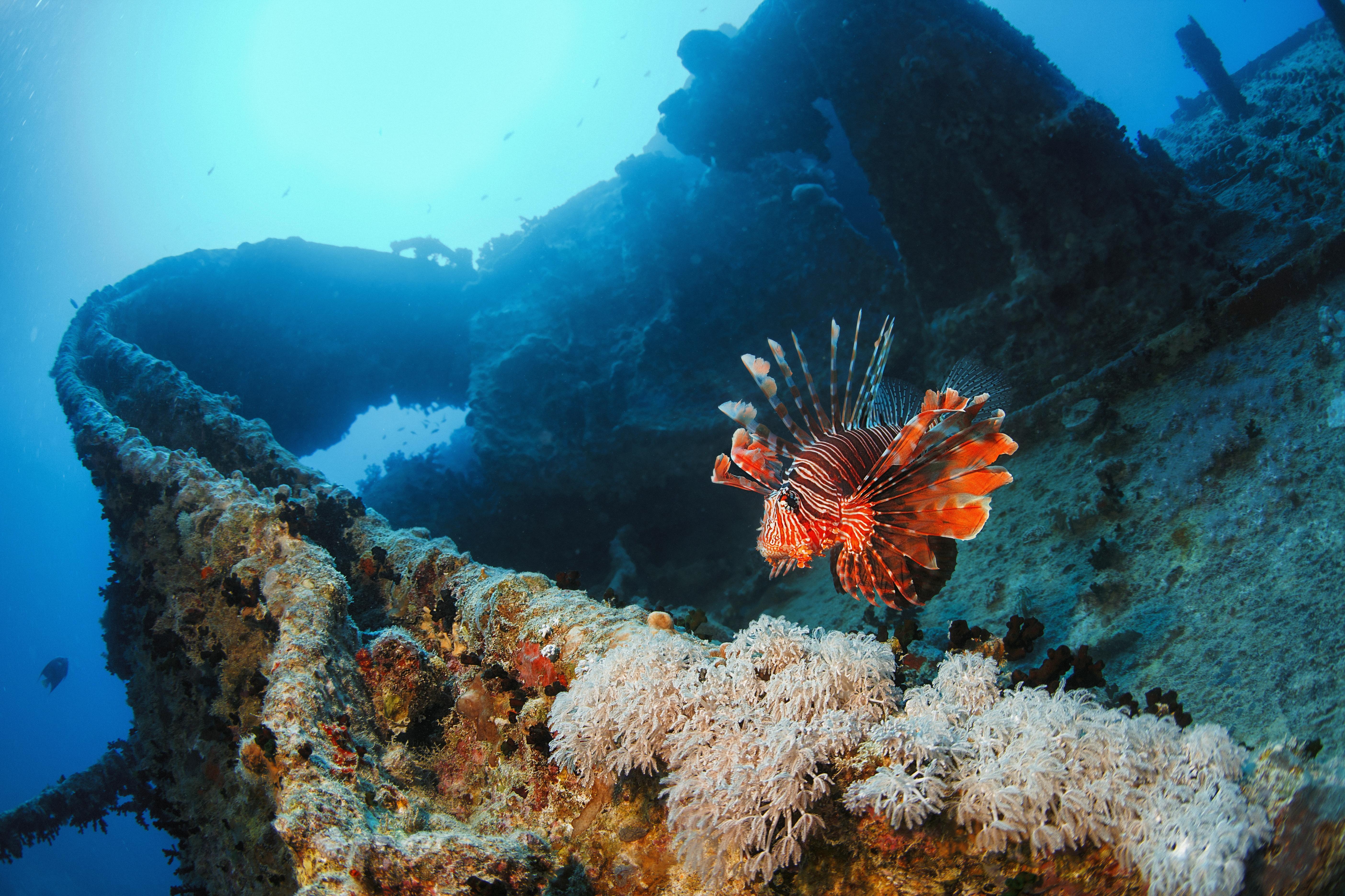 Unterwasserbild von einem Wrack in Varadero mit Korallen und einem Rotfeuerfisch